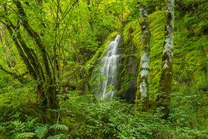 Бесплатные фото водопад,лес,деревья,мох,скалы,природа,зелёный
