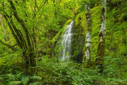 Бесплатные фото водопад,лес,деревья,мох,скалы,природа,зелёный,Поуис,Уэльс,Великобритания,пейзаж