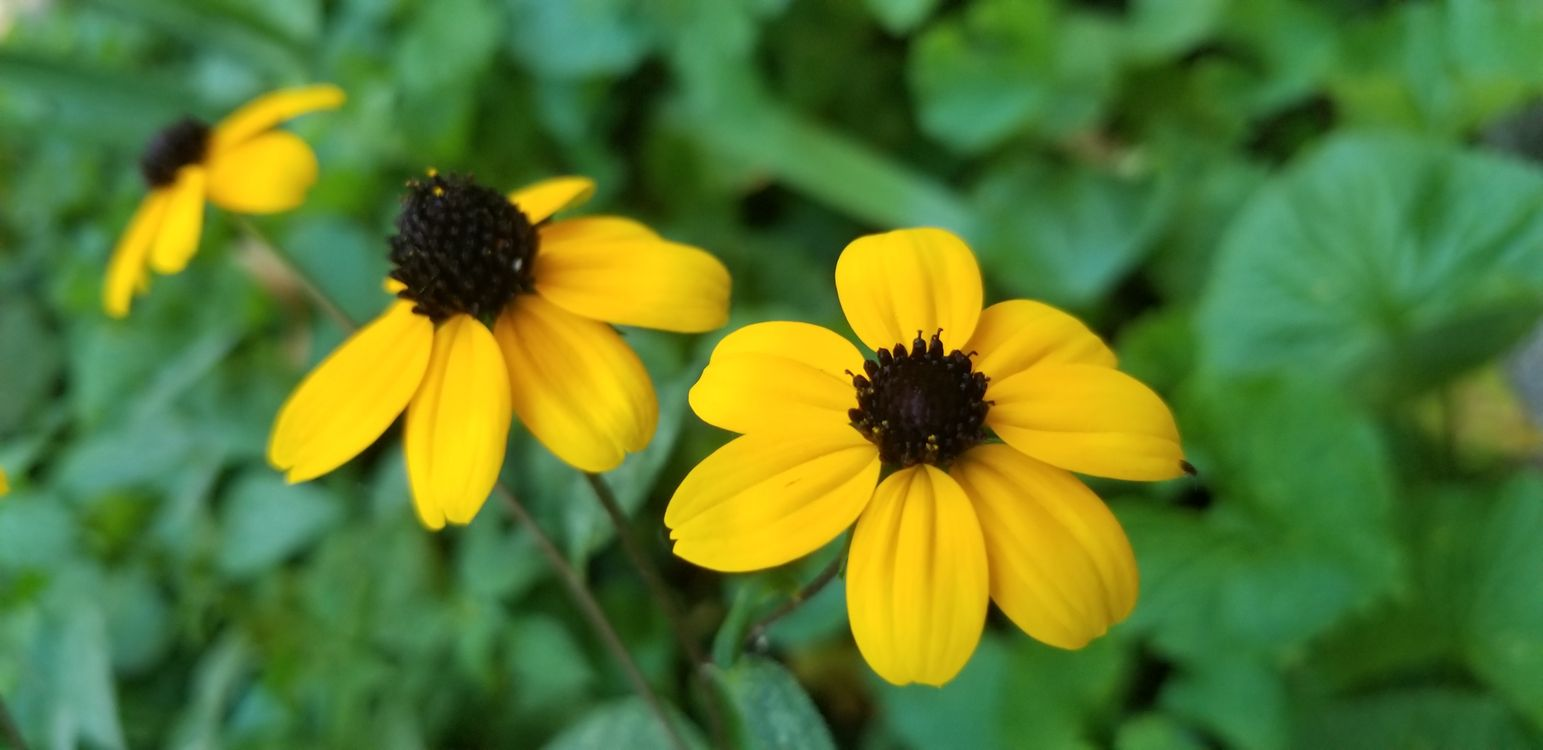 Фото бесплатно желтые цветы, лепестки, листья - на рабочий стол