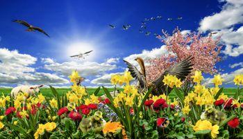 Заставки фантазия, поле, цветы