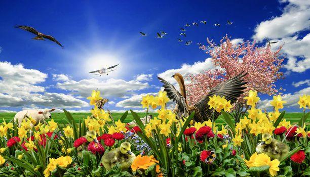 Фото бесплатно фантазия, поле, цветы
