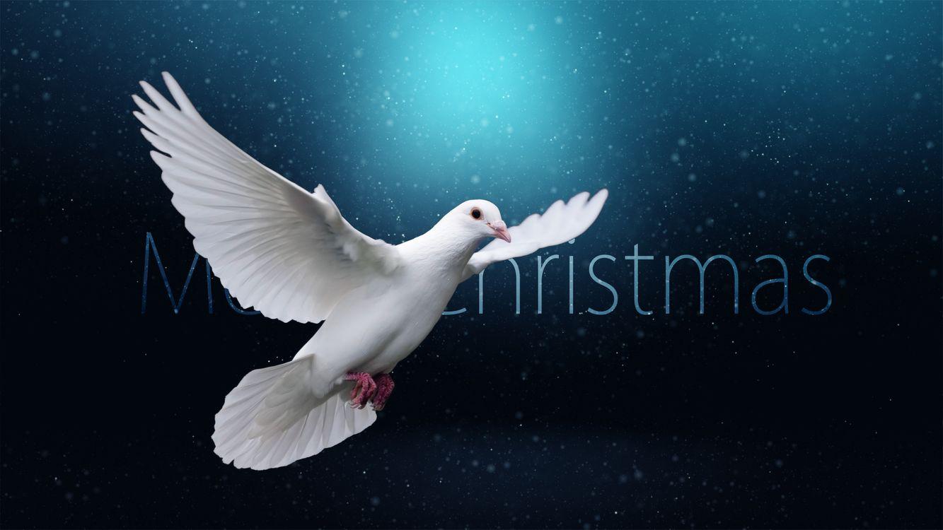 Фото бесплатно Рождество, фон, дизайн, элементы, новогодние обои, новый год, новогодний стиль, новогодняя декорация, рождественский орнамент, с новым годом, новый год