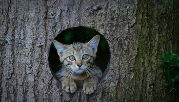 Фото бесплатно дерево, дупло, морда