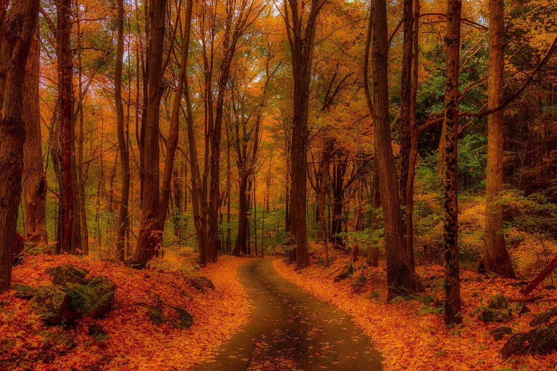 Лесная тропинка усеянная осенней листвой · бесплатное фото