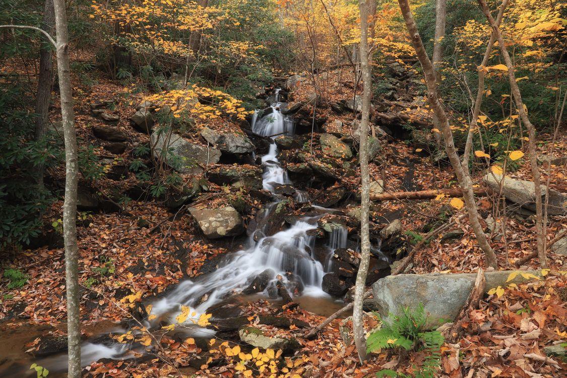 Ручей в лесу · бесплатное фото