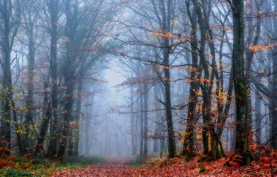 Photo free autumn colors, fog, autumn leaves