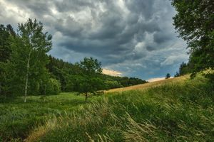 Бесплатные фото поле,деревья,трава,небо,облака,природа,пейзаж