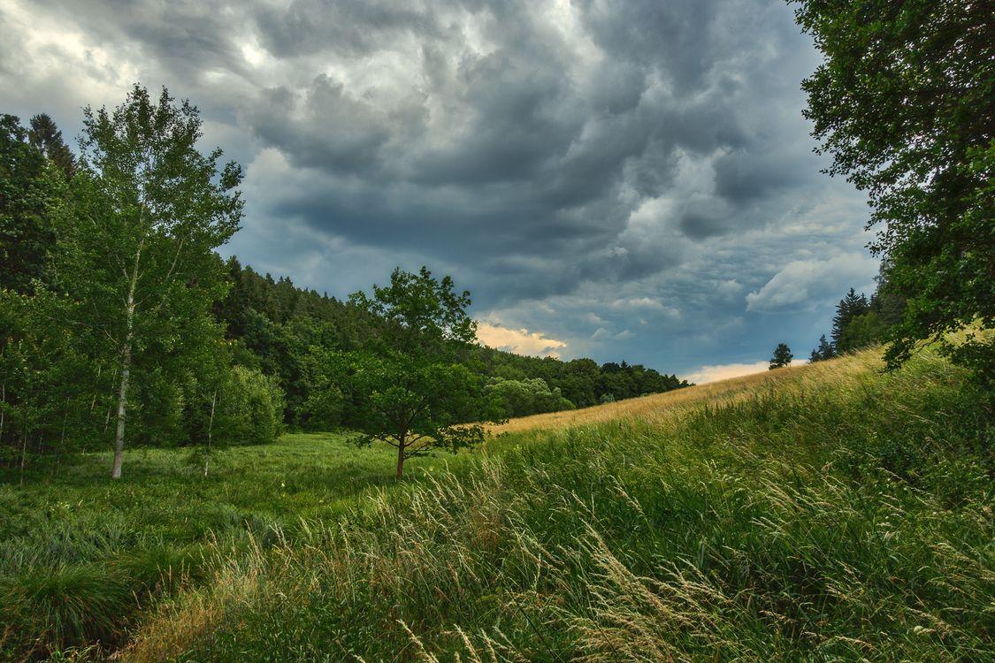 Фото бесплатно поле, деревья, трава, небо, облака, природа, пейзаж, пейзажи