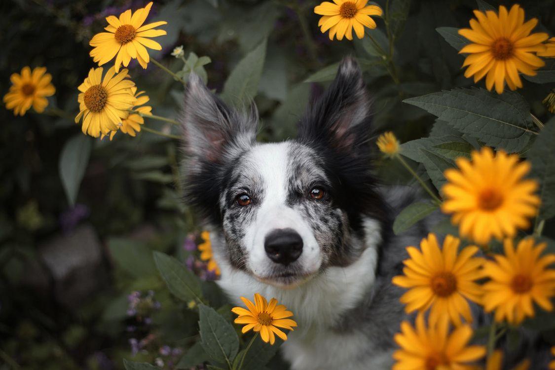 Собака в желтых цветах · бесплатное фото