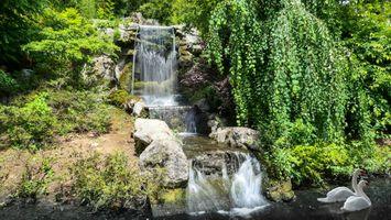 Бесплатные фото водоём,водопад,деревья,лебеди,пейзаж