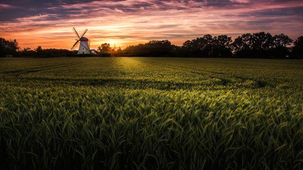 Photo free trees, wind mill, ears