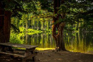 Фото бесплатно лес, трава, озеро