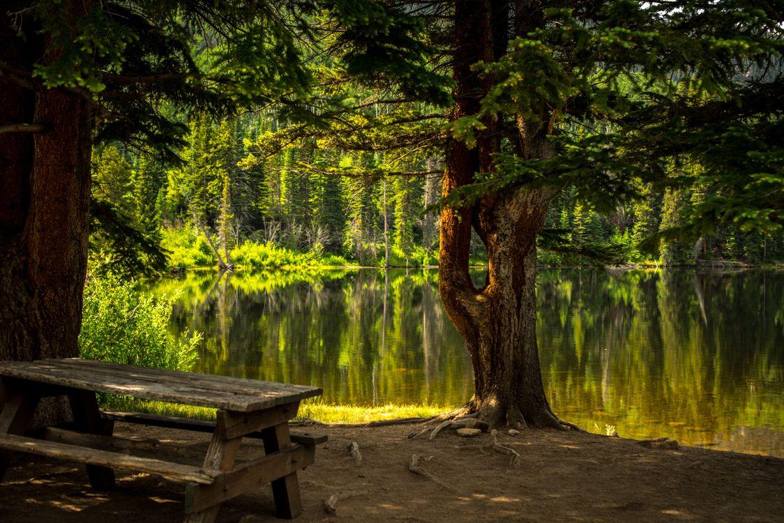 Фото бесплатно лес, трава, озеро - на рабочий стол