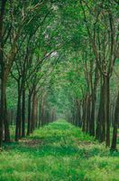 Фото бесплатно небо, зеленый, дерево