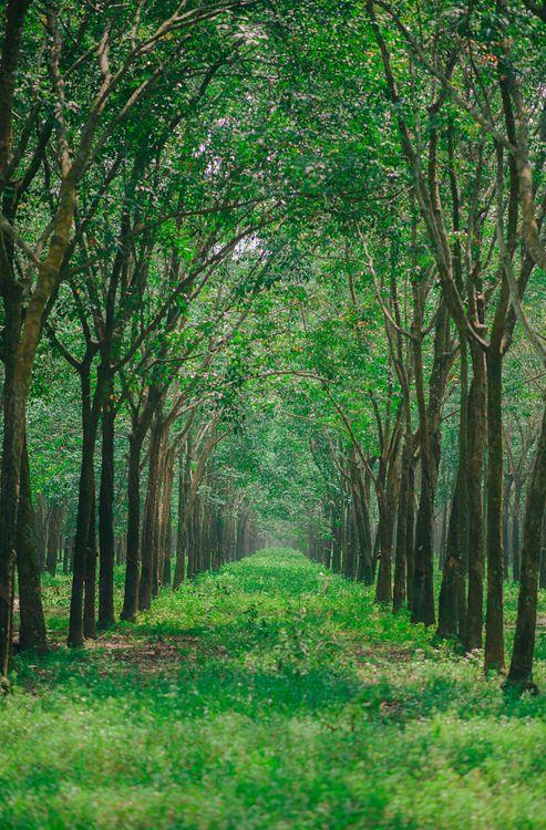 Фото бесплатно небо, зеленый, дерево, лесистая местность, растительность, природа, экосистемный, лес, роща, естественный запас, дорожка, лист, умеренный широколиственный и смешанный лес, старый растущий лес, трава, природа