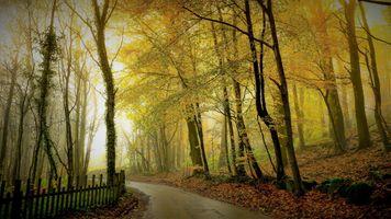 Заставки природа, осень цвета, туман