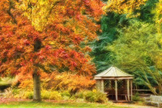 Фото бесплатно осень, парк, деревья, беседка, природа, пейзаж
