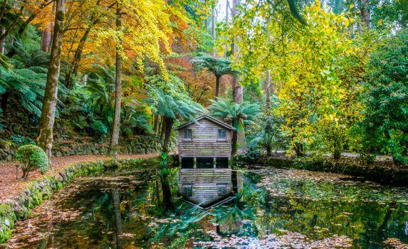 Бесплатные фото Штат Виктория,Австралия,лес,деревья,водоём,хижина,домик,пейзаж,осень