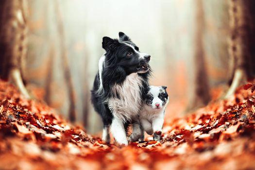 Мама и малыш в  осеннем парке