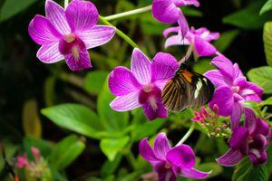 Фото бесплатно цветы, орхидеи, бабочка