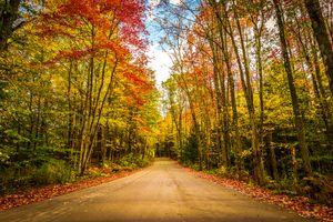 Фото бесплатно лес, дорога, краски осени