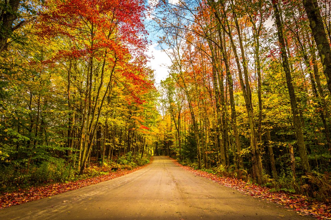 Обои лес, дорога, краски осени картинки на телефон
