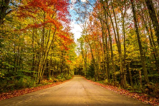 Photo free forest, road, paints of autumn