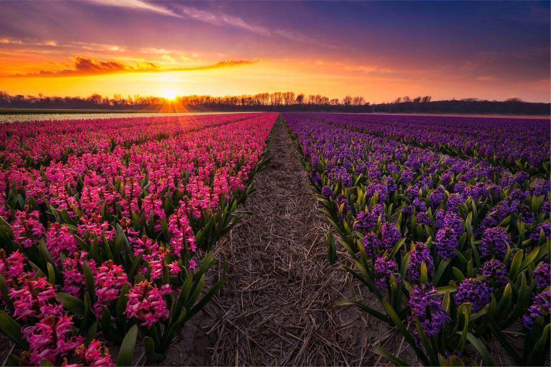 Цветы гиацинты · бесплатное фото