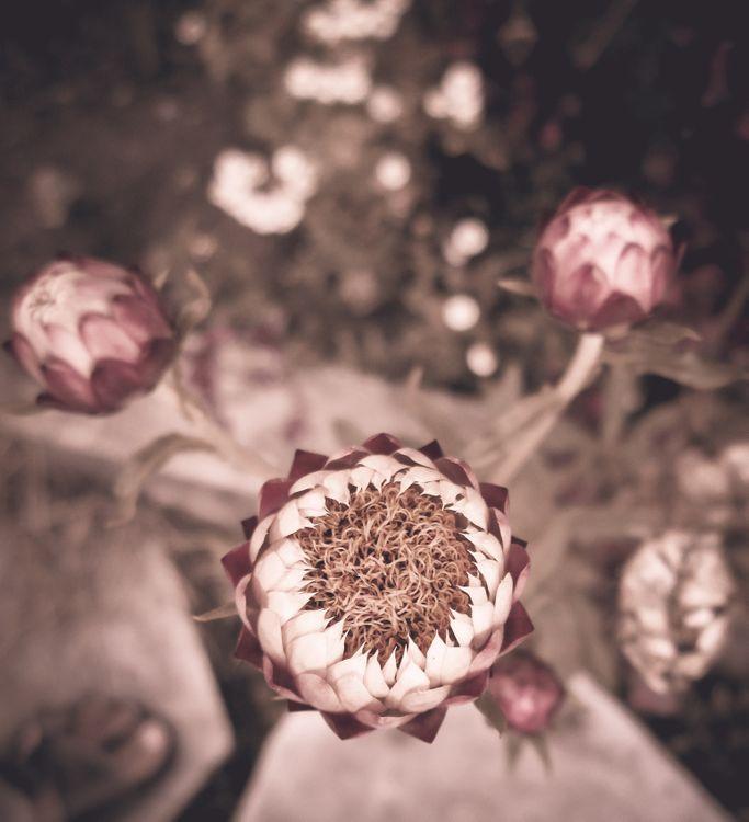 Фото бесплатно обои, цветок обои, марочный, винтажная коллекция, старинные фотографии, цветы