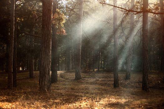 Photo free dawn, the environment, autumn