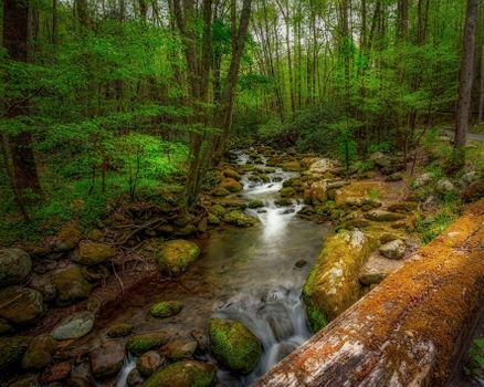 Бесплатные фото Great Smoky Mountains National Park,камни,мох,бревно,поваленное дерево,зелень,весна,лес,речка,ручей,водопад,деревья