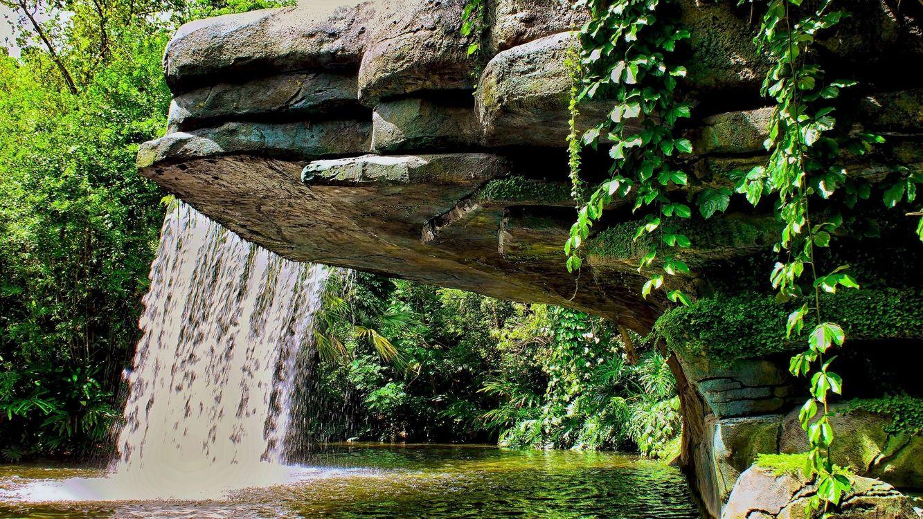 Фото бесплатно лесная природа, пруд, растительность - на рабочий стол