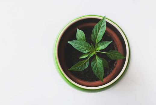 Фото бесплатно Leafe, грунт растение, цветок
