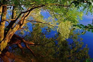 Фото бесплатно закат, дерево, небо