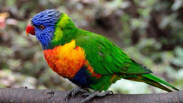 Фото бесплатно попугай, птица, красочный
