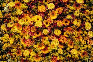 Бесплатные фото groc, желтый, цветок, ядро, san francisco, городской пейзаж, флора