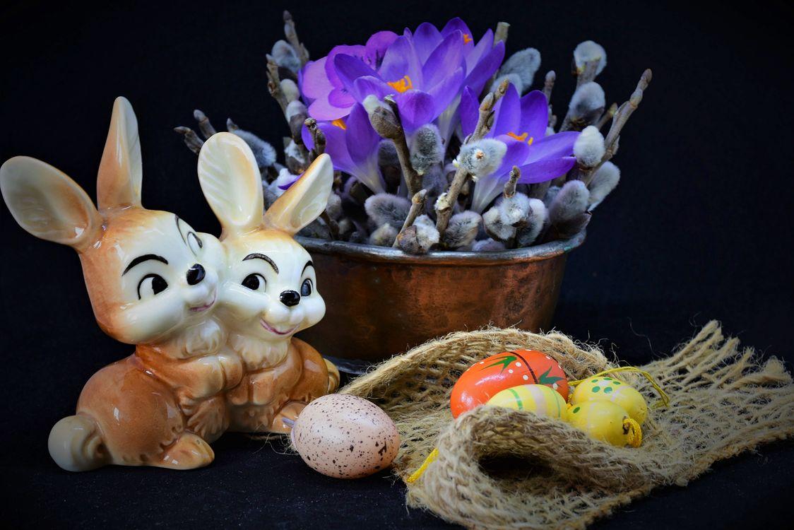 Фото бесплатно крокус, природа, цветение - на рабочий стол