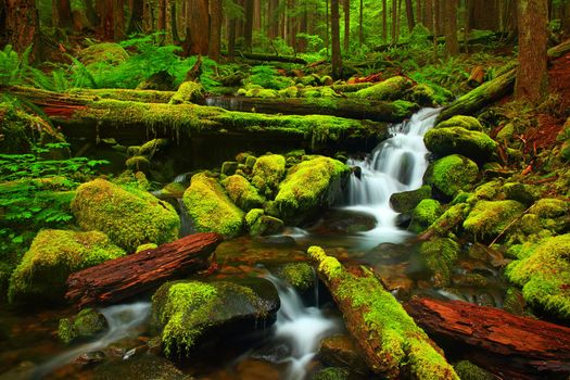 Фото бесплатно Mossy Creek, Olympic National Park, Washington