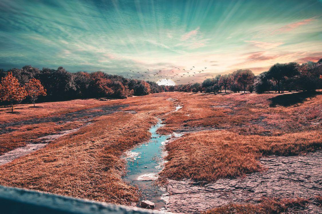 Фото бесплатно солнце, поле, птицы, вода, живописный, пейзажи - скачать на рабочий стол