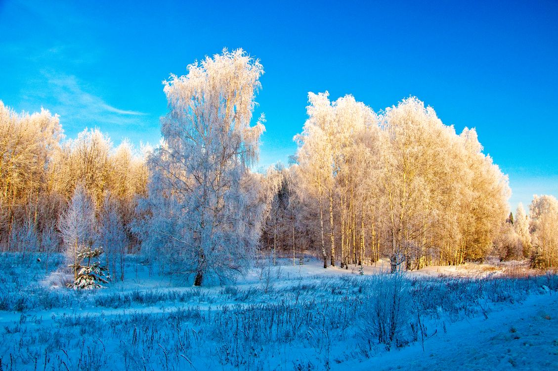 Фото бесплатно снег, лес, поле - на рабочий стол