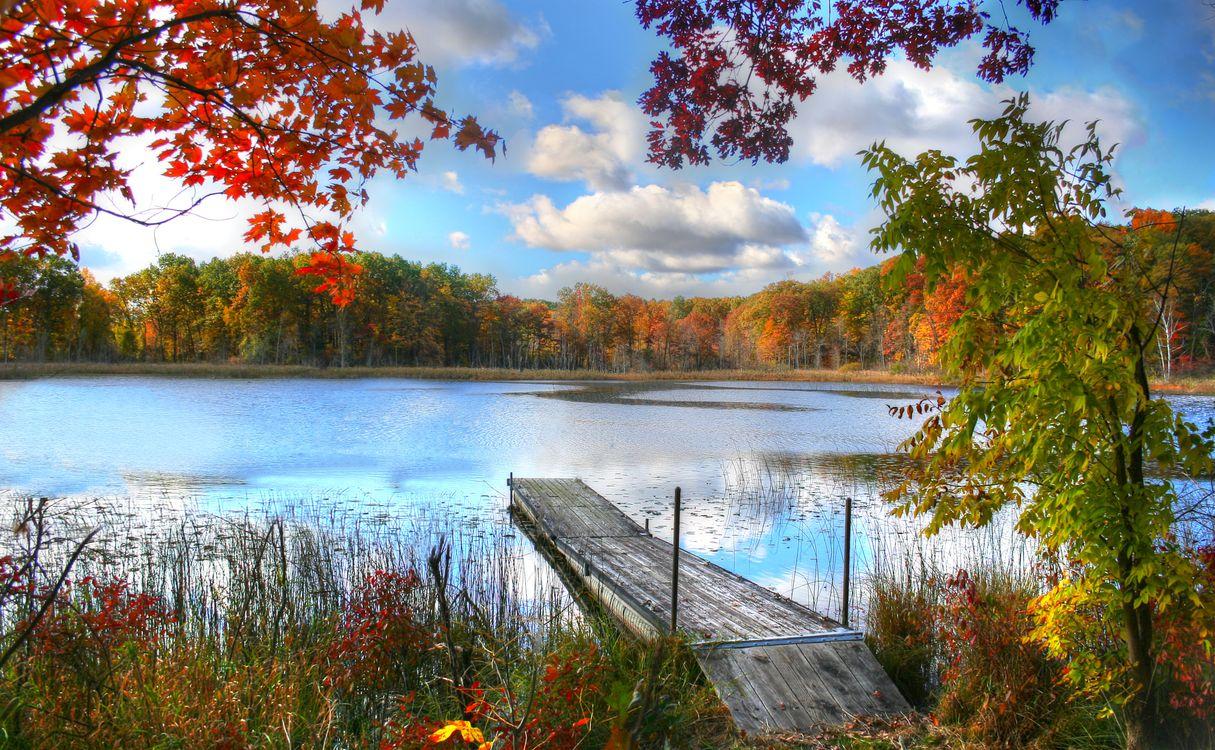 Фото бесплатно осень, река, лес, деревья, мостик, причал, природа, пейзаж, пейзажи
