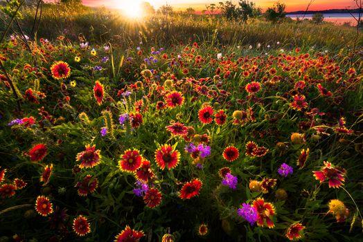 Фото бесплатно цветение, поле, закат