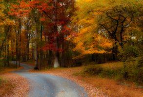Фото бесплатно осенние листья, парк, дорога в лес