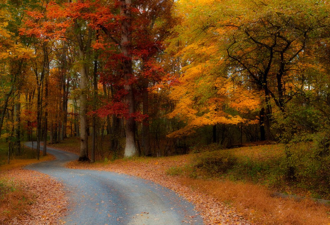 Обои осенние листья, парк, дорога в лес картинки на телефон
