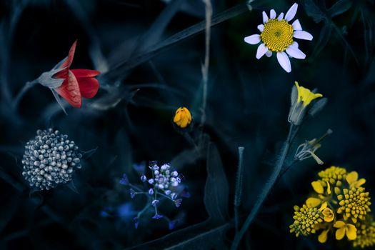Заставки поле,цветы,манипуляции,природа,разнообразие,трава,растения,макро