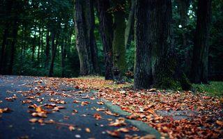 Заставки осень, сад, пейзаж