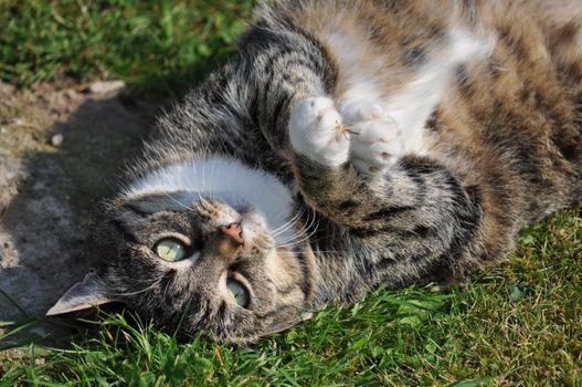 Фото бесплатно котенок, игривый, лежать