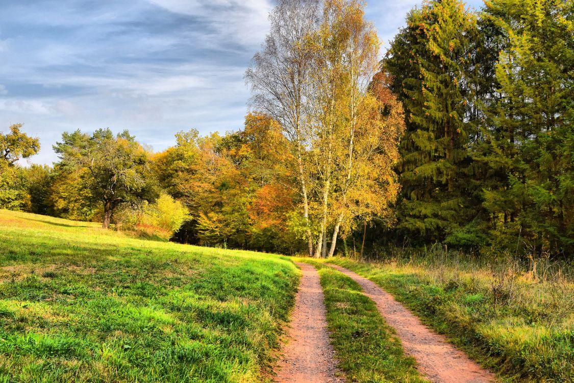 Лесная летняя дорога · бесплатное фото