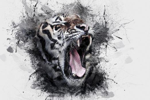 Фото бесплатно дикая кошка, тигр, млекопитающее