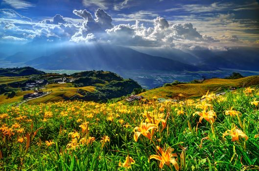 Фото бесплатно облака, цветы, лилии